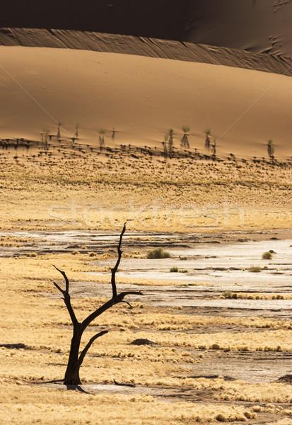 ölü ağaç siluet park Namibya güney Afrika Stok fotoğraf © mdfiles