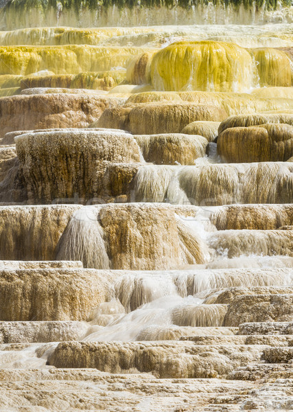 Sıcak park Wyoming ABD doğa sarı Stok fotoğraf © mdfiles