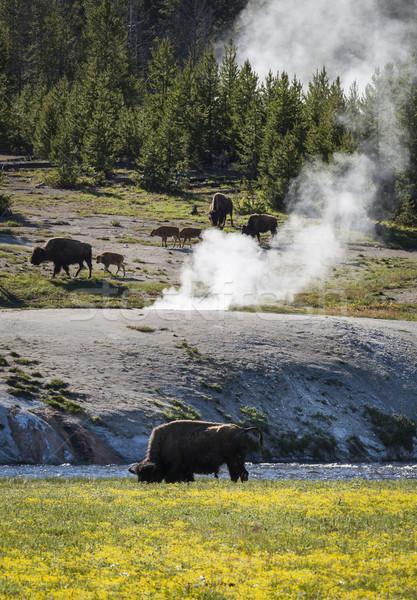 Park Wyoming Amerika Birleşik Devletleri orman hayvan Amerika Stok fotoğraf © mdfiles