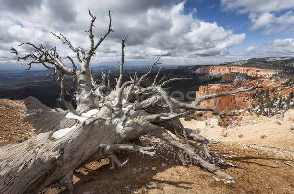 Kidőlt fa hurok kanyon Utah USA égbolt Stock fotó © mdfiles