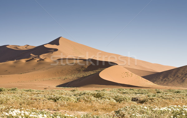 Büyük çöl Namibya Afrika manzara uzak Stok fotoğraf © mdfiles