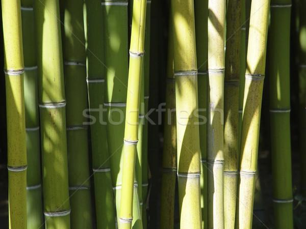 Bambu orman parlak güneş ışığı yeşil bitki Stok fotoğraf © mdfiles