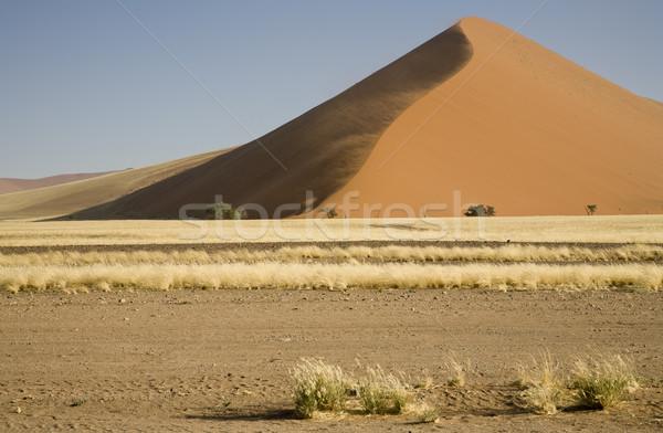 Büyük kumul güçlü rüzgâr çöl park Stok fotoğraf © mdfiles