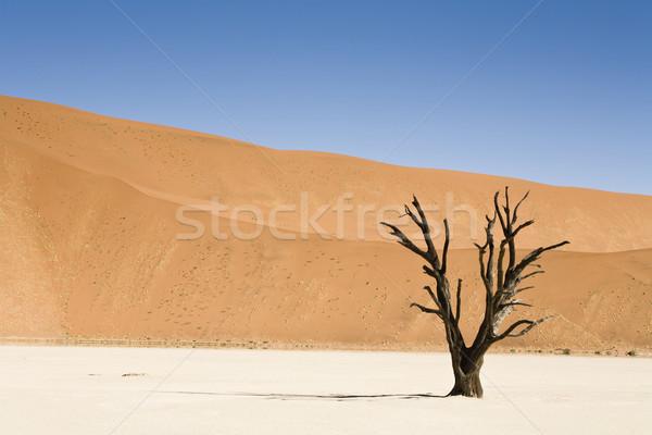 ölü ağaç ölü çöl Namibya Afrika ağaç Stok fotoğraf © mdfiles