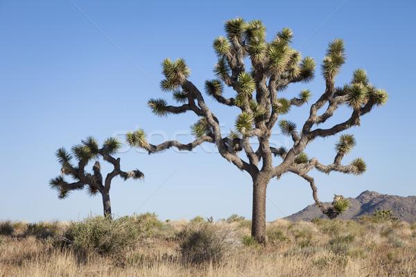 Fák égbolt természet kék USA kint Stock fotó © mdfiles
