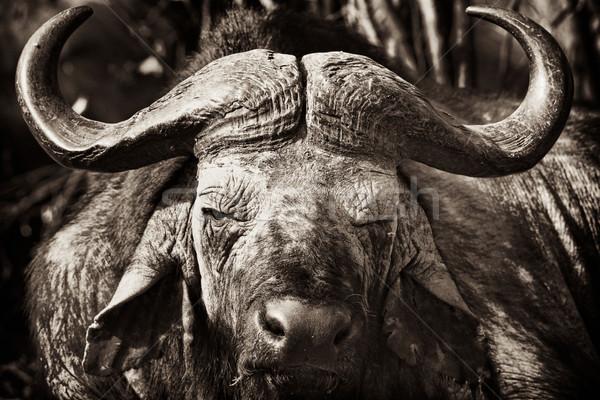 Afrika kurutulmuş çamur yüz cumhuriyet Kenya Stok fotoğraf © mdfiles