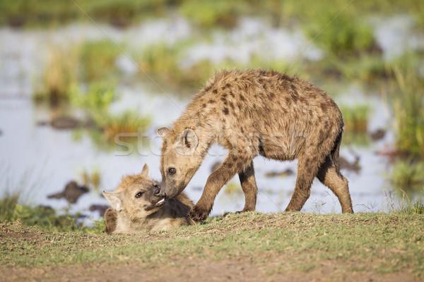 2 挨拶 その他 リザーブ ケニア 東部 ストックフォト © mdfiles