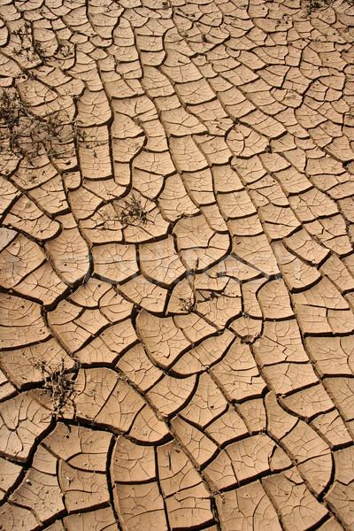 Globális felmelegedés textúra háttér sivatag eső nyár Stock fotó © mehmetcan
