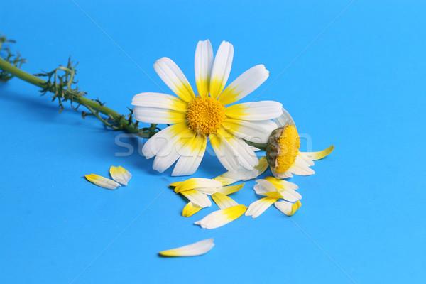 Daisy hemel water voorjaar gras landschap Stockfoto © mehmetcan