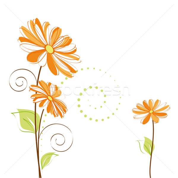 Springtime colorful Daisy flower on white background Stock photo © meikis