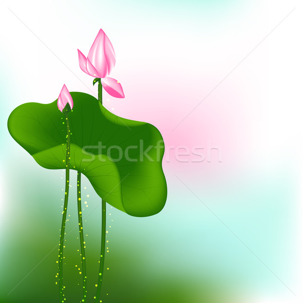 Stock photo: Pink Lotus Flower on Green Background