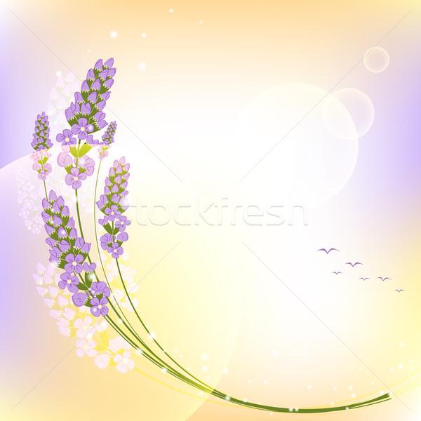 Photo stock: Pourpre · lavande · fleur · coloré · coucher · du · soleil · fond