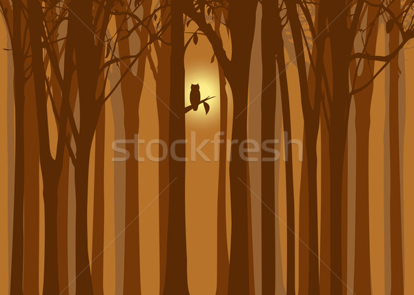 Halloween illustratie najaar bos uil abstract Stockfoto © meikis