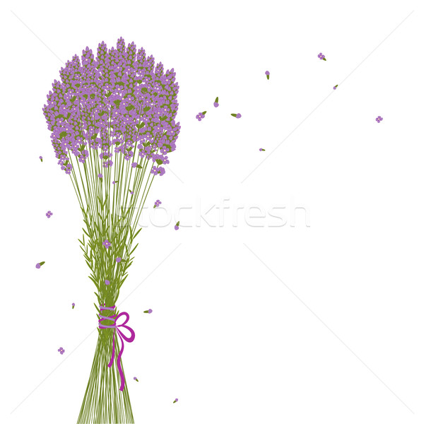 Photo stock: Pourpre · lavande · fleur · carte · de · vœux · fond · vert