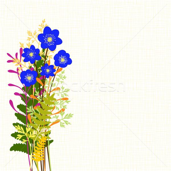 Springtime Blue Hepatica Nobilis with Wild Grass Background Stock photo © meikis