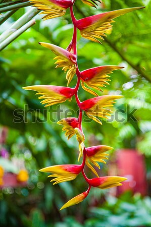 Fiore banana albero giardino botanico primavera foresta Foto d'archivio © meinzahn