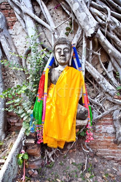 Buddha fedett gyökerek templom királyi palota Stock fotó © meinzahn