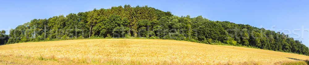 rural landscape with fields and blue sky Stock photo © meinzahn