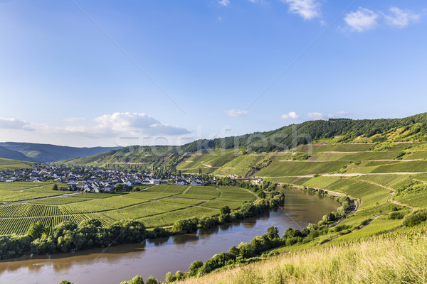famous Moselle loop at Trittenheim Stock photo © meinzahn