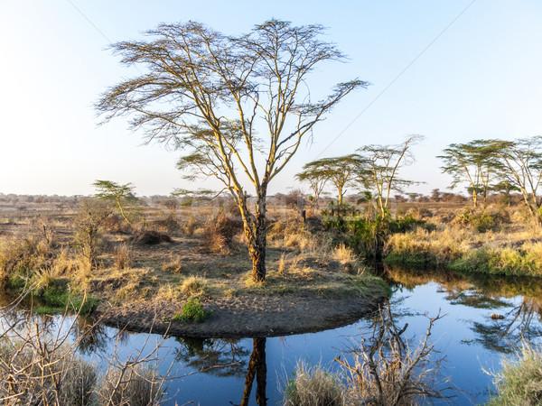 Zonsondergang serengeti park boom zon Stockfoto © meinzahn