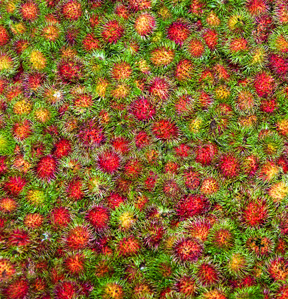 sweet fruits Rambutan similar to Lychee Stock photo © meinzahn