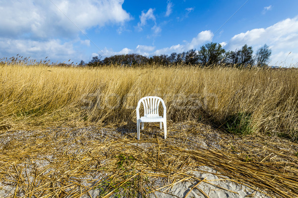 reeds of grass with blue sky and plastic chair  Stock photo © meinzahn
