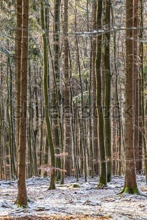 Fák tél sűrű erdő égbolt hó Stock fotó © meinzahn