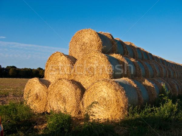 Baal stro najaar intensief kleuren hemel Stockfoto © meinzahn