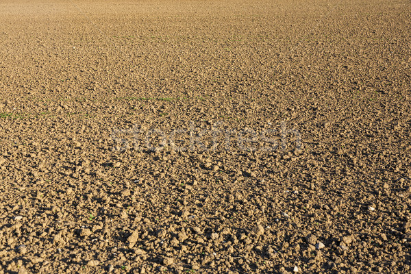 plough agriculture field before sowing  Stock photo © meinzahn