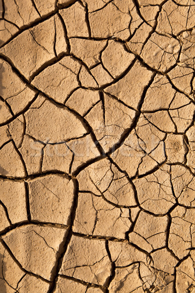 Dry cracked earth texture  Stock photo © meinzahn