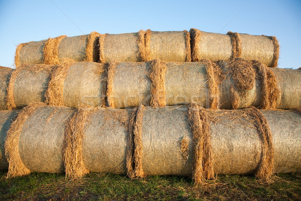 bale of straw with blue sky Stock photo © meinzahn
