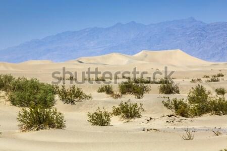 dried desert gras in Mesquite Flats Sand Dunes  Stock photo © meinzahn