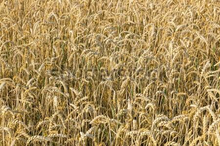Dondurulmuş çim çayır kış gıda güneş Stok fotoğraf © meinzahn