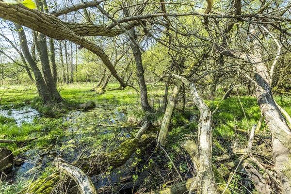Foto d'archivio: Romantica · foresta · natura · parco · nubi · erba