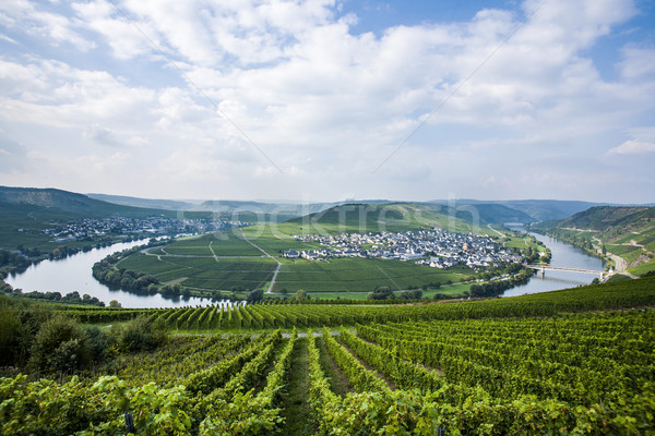 Famous Moselle river loop in Trittenheim, Germany Stock photo © meinzahn