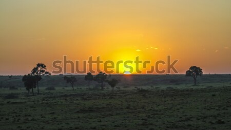 sunset in Masai Mara National Park. Stock photo © meinzahn