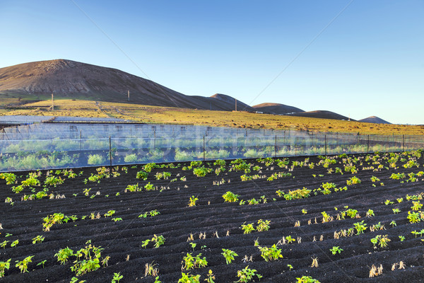 water irrigation system on a field with a volcano in the backgro Stock photo © meinzahn