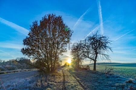 sunrise in winter with hoar frost in the fields and blue sky Stock photo © meinzahn
