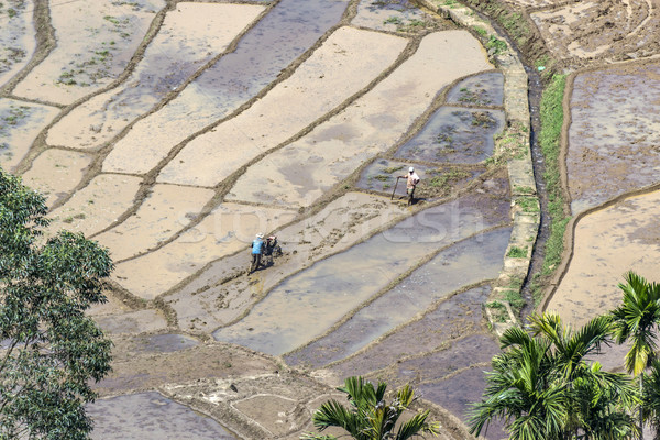 Stock photo: farmer works on rice paddies in terracced fields