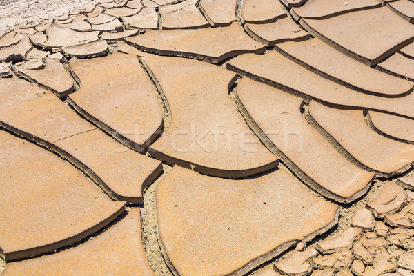 dried and cracked mud in the near of a dried up creek Stock photo © meinzahn