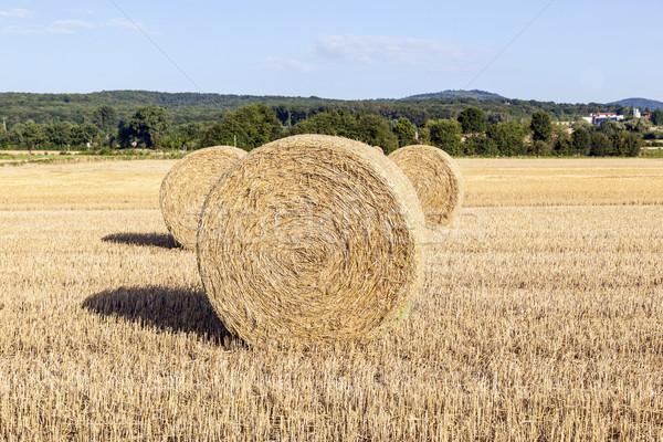 Mező aratás bála szalmaszál kék ég étel Stock fotó © meinzahn