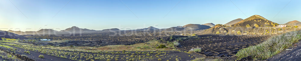 volcanic landscape with vinery at La Geria  Stock photo © meinzahn