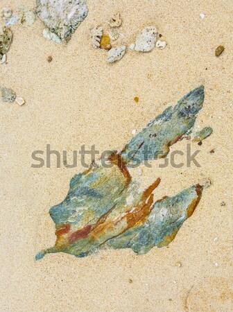 Belo pedras praia interessante harmônico rochas Foto stock © meinzahn