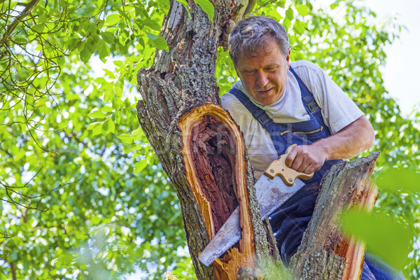 Stock photo: man cutting a tree with a saw