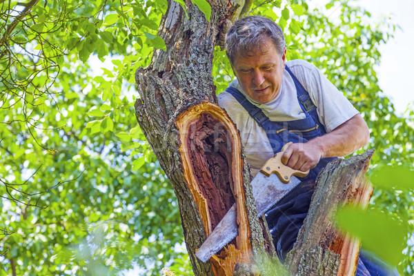 Homme arbre vu bois construction Photo stock © meinzahn
