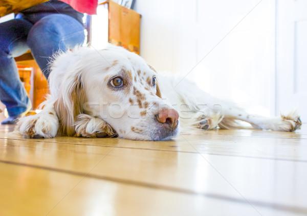 Kutya fapadló ebédlő szeretet fa otthon Stock fotó © meinzahn