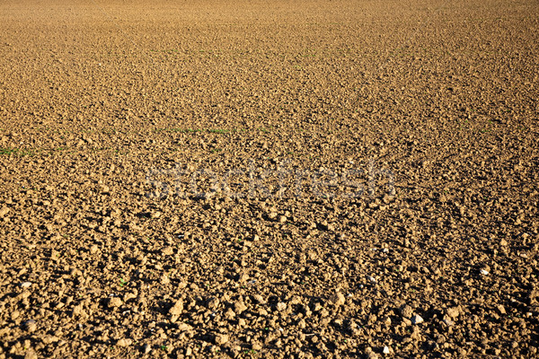 fresh plowghed acres in beautiful light Stock photo © meinzahn