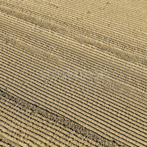 pattern of grated sand early morning at south beach Stock photo © meinzahn