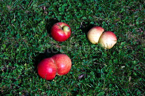 apples with interresting deformations give fantasy a chance Stock photo © meinzahn