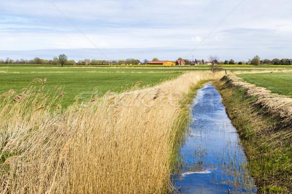 Balti-tenger falu horizont természet fák mező Stock fotó © meinzahn